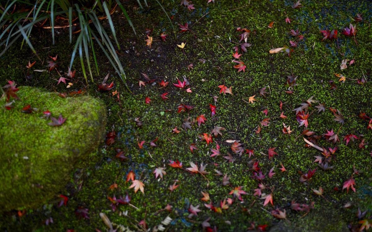 風景を彩る、美しき紅葉散歩