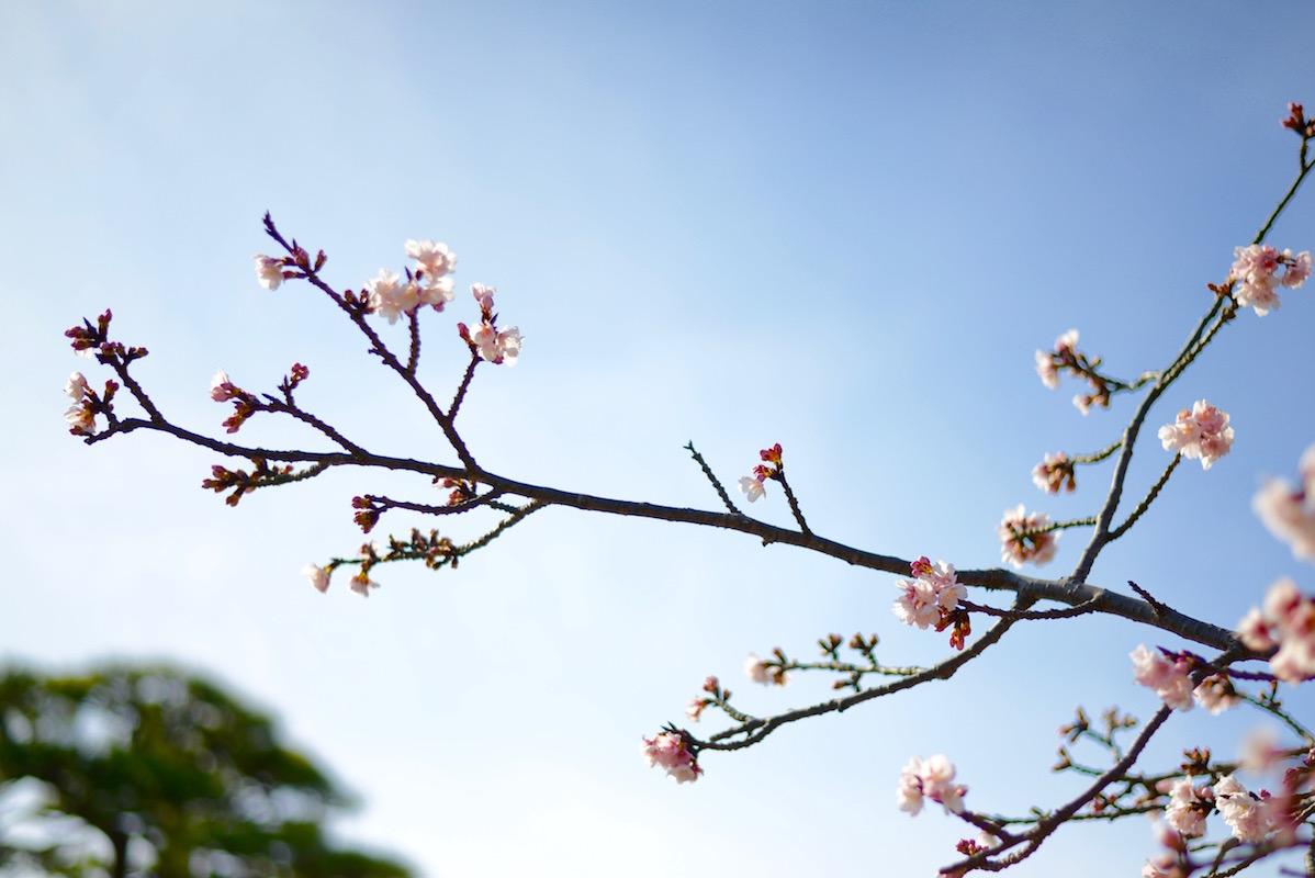 風情ある鎌倉で楽しむ、春の訪れ